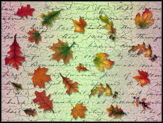树叶、枫叶、落叶photoshop笔刷素材 树叶笔刷 枫叶笔刷 叶子笔刷  plants brushes