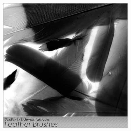 轻盈的羽毛、鹅毛photoshop笔刷下载 鹅毛笔笔刷 鹅毛笔刷 羽毛笔笔刷 羽毛笔刷  wings brushes