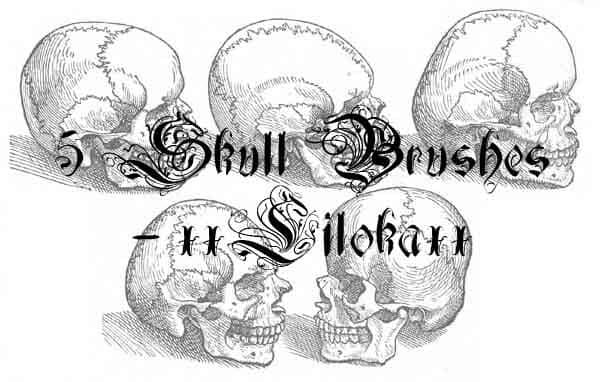 素描式骷髅头photoshop笔刷素材