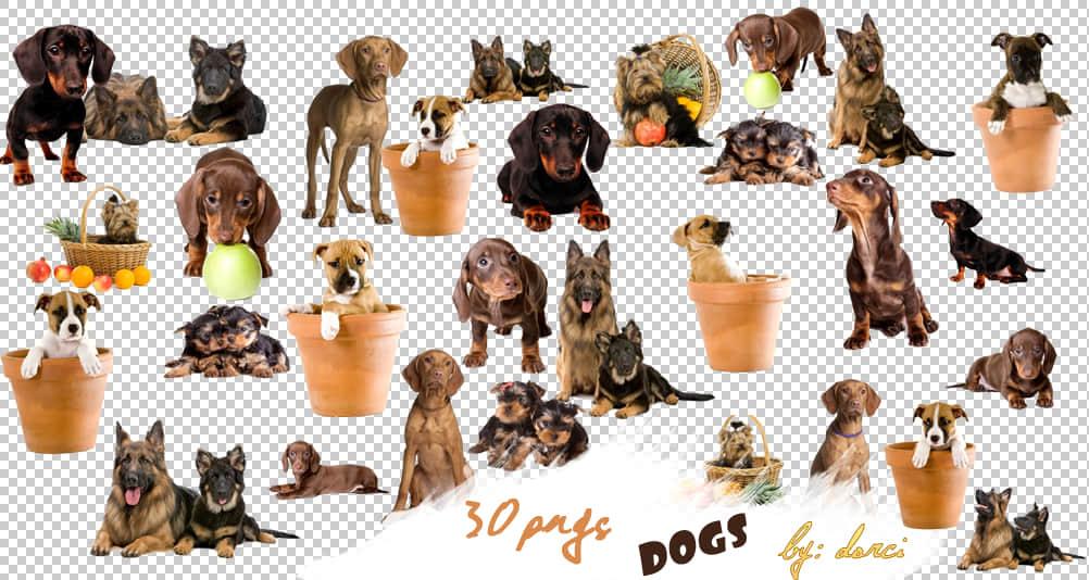 30个可爱小狗模样照片装饰素材-【美图秀秀素材】