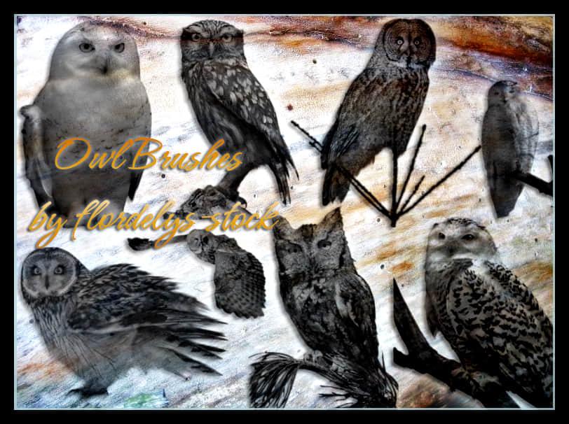 真实的猫头鹰photoshop笔刷素材