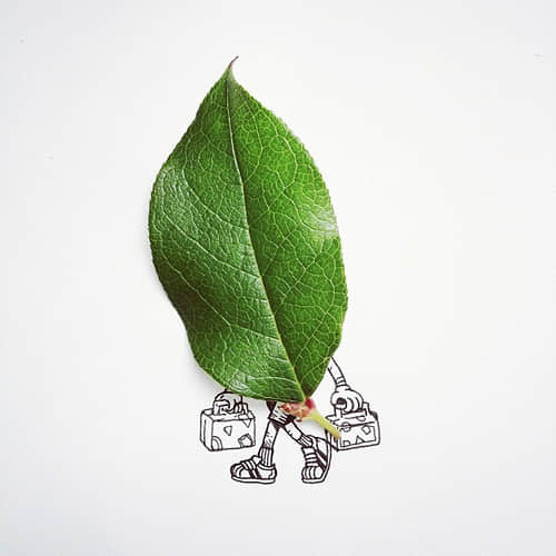 19-time-to-leaf