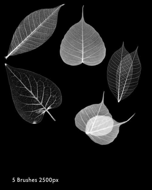 植物树叶PS笔刷素材
