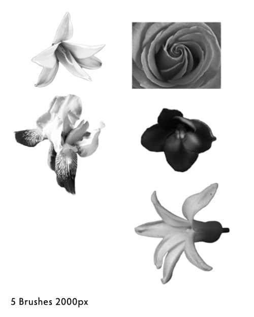 真实的鲜花花朵photoshop笔刷素材