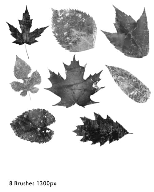 树叶标本、落叶、枫叶、梧桐叶等叶子photoshop笔刷素材 落叶笔刷 树叶笔刷 叶子笔刷  plants brushes