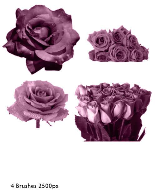 玫瑰花朵、玫瑰花束PS笔刷素材