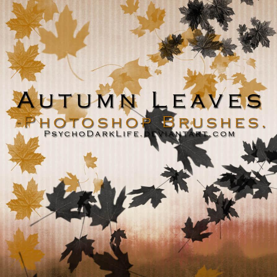秋天梧桐叶、落叶、树叶PS笔刷素材