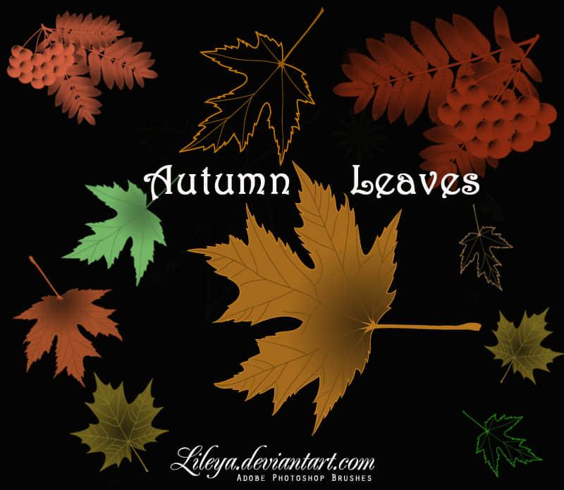 秋天枫叶、梧桐叶、落叶photoshop笔刷素材下载