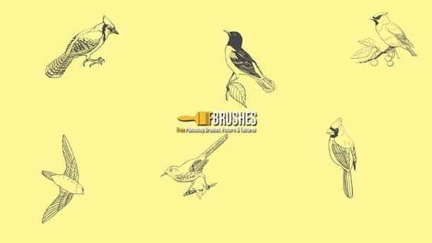 线条啄木鸟、喜鹊、鹦鹉等鸟图案PS笔刷素材