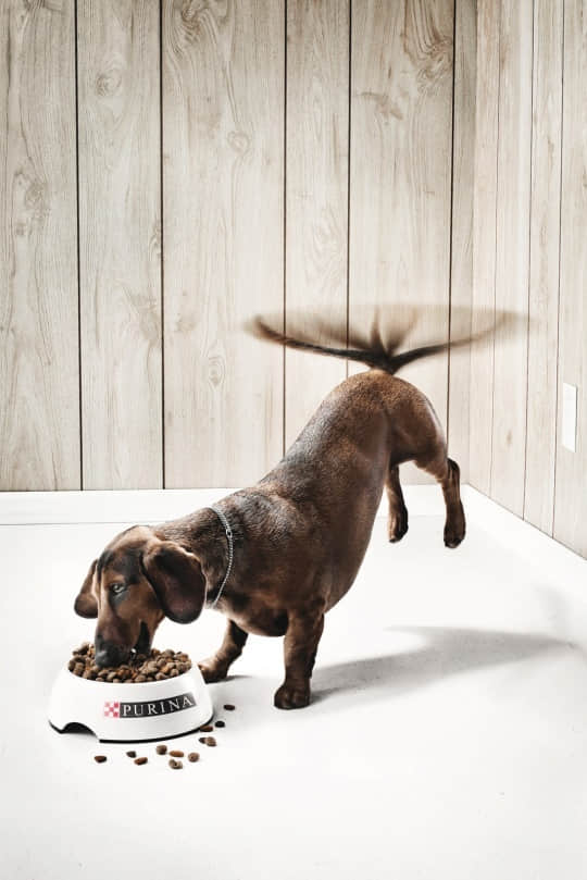 12-funny-animal-advertisement