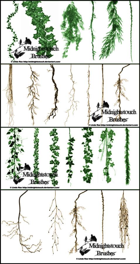 爬山虎、藤蔓、牵牛花等植物photoshop笔刷素材