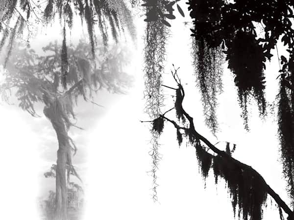 雾凇、松叶背景素材photoshop笔刷 雾凇笔刷  plants brushes