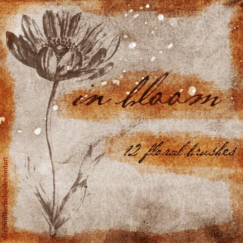 手绘素猫式花朵、鲜花photoshop笔刷素材 鲜花笔刷 素描花朵笔刷  flowers brushes