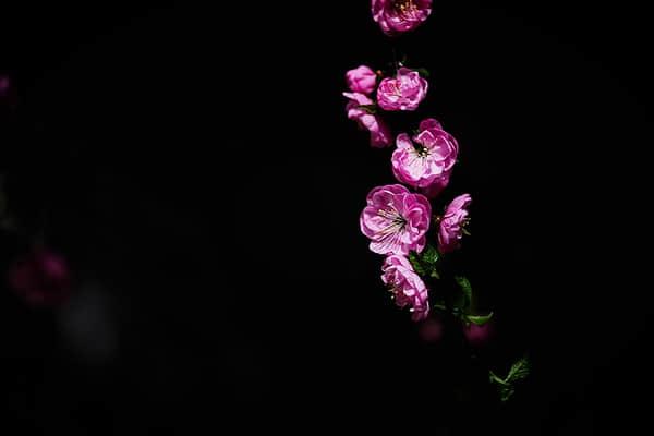 七招巧拍树上花,一年又一年,春暖花又开! 摄影技术  ruanjian jiaocheng