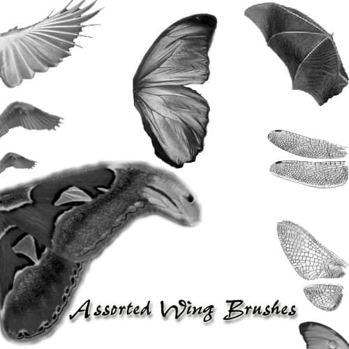 昆虫蝉翼翅膀PS笔刷素材