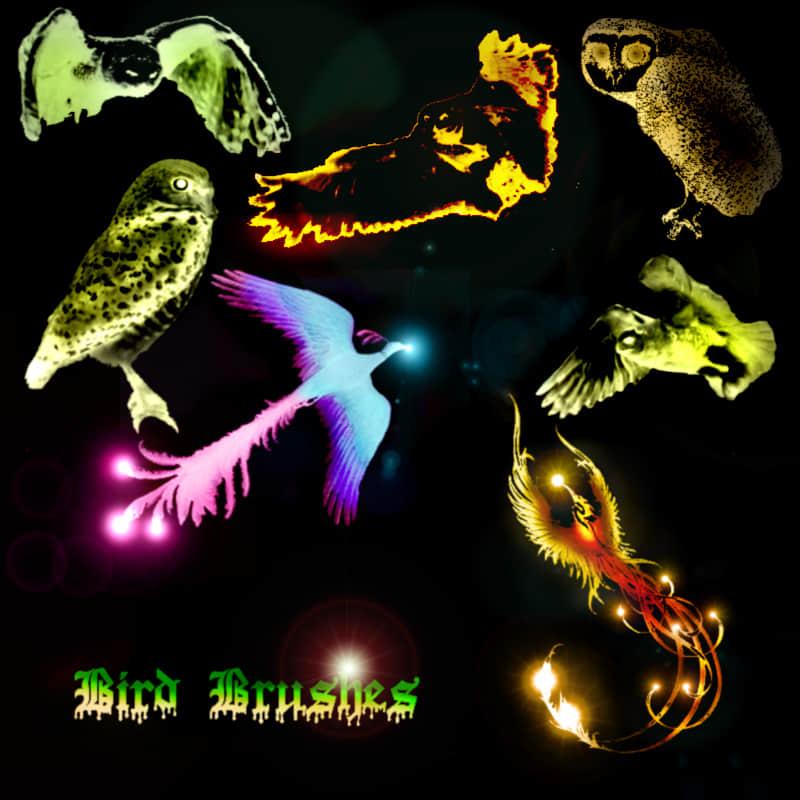 凤凰、猫头鹰photoshop笔刷素材下载