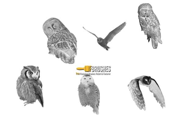 真实的猫头鹰图片素材photoshop笔刷下载