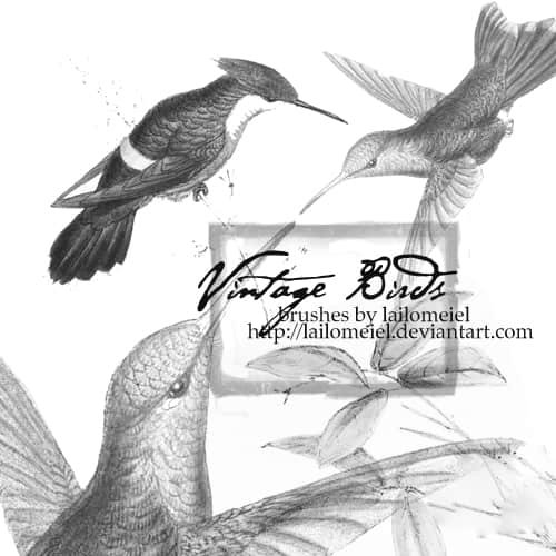 20种不同种类的鸟图案photoshop笔刷素材