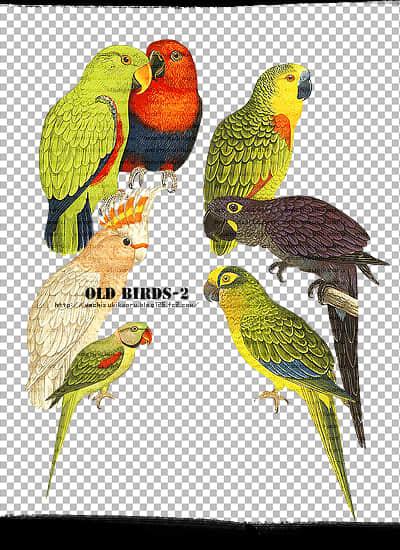 可爱卡通鹦鹉透明图片素材【美图秀秀素材包】