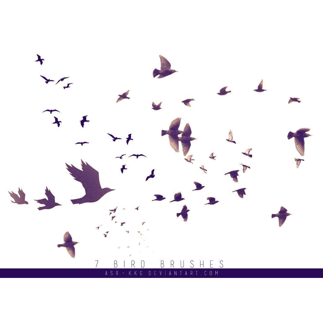 飞翔的鸟语鸟群Photoshop笔刷素材