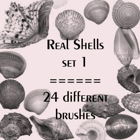 真实的海螺、贝壳图形Photoshop笔刷素材 #.1