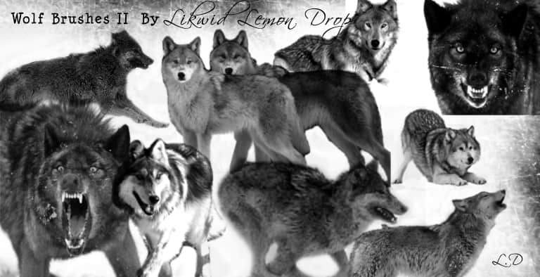 狼素材Photoshop动物笔刷 #.1
