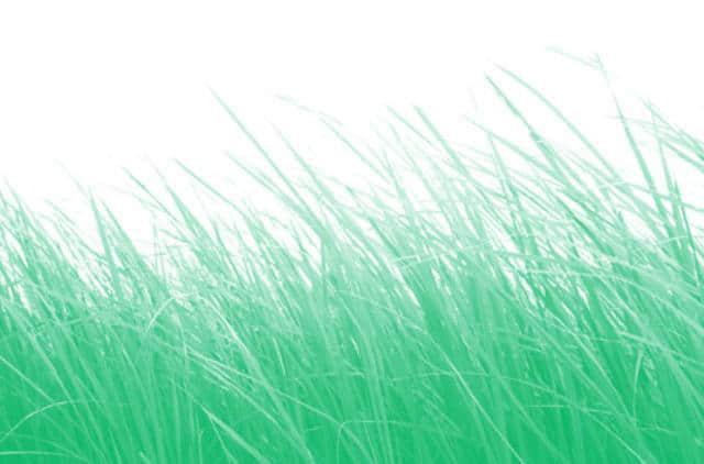 密集的真是草地、草丛Photoshop笔刷素材