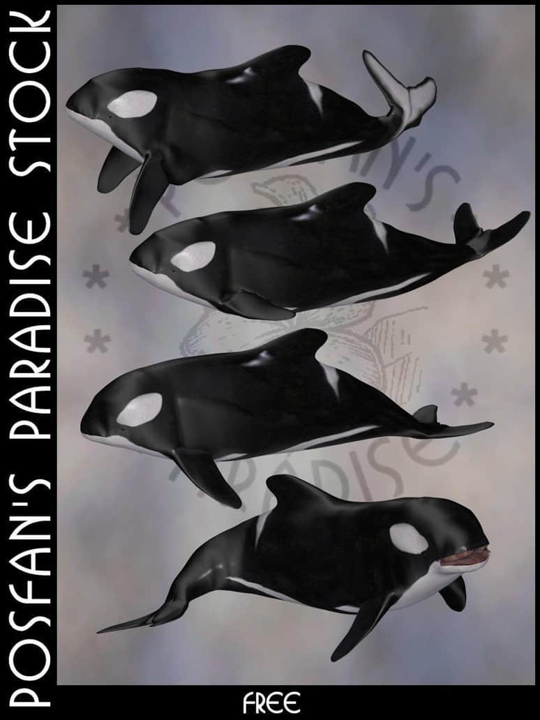 鲸鱼、抹香鲸Photoshop动物笔刷