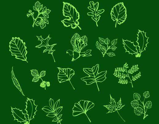 手绘线框式各种植物树叶Photoshop笔刷素材
