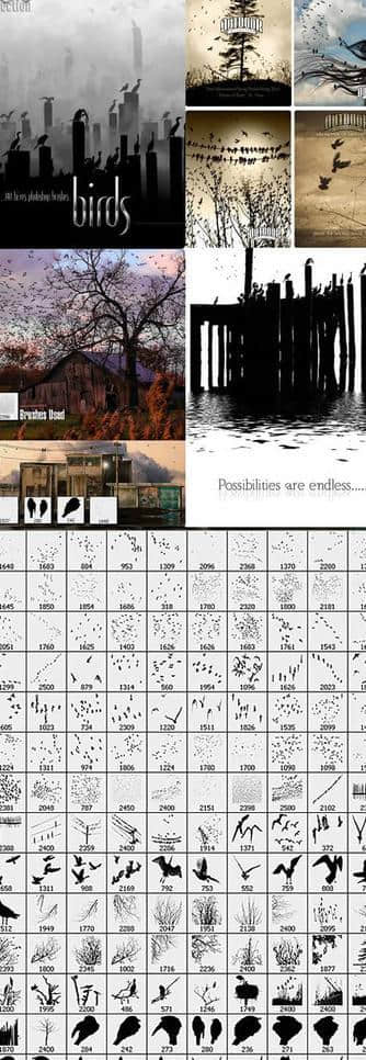 鸟类、鸟群、候鸟Photoshop笔刷素材