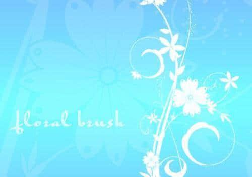 漂亮的植物花纹照片美图背景边框饰品PS笔刷 #.77