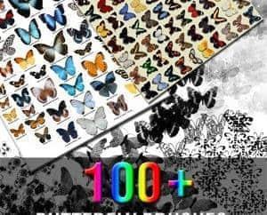 100+种标本式美丽的蝴蝶Photoshop笔刷下载