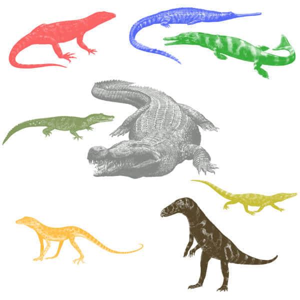 鳄鱼、蜥蜴Photoshop动物笔刷