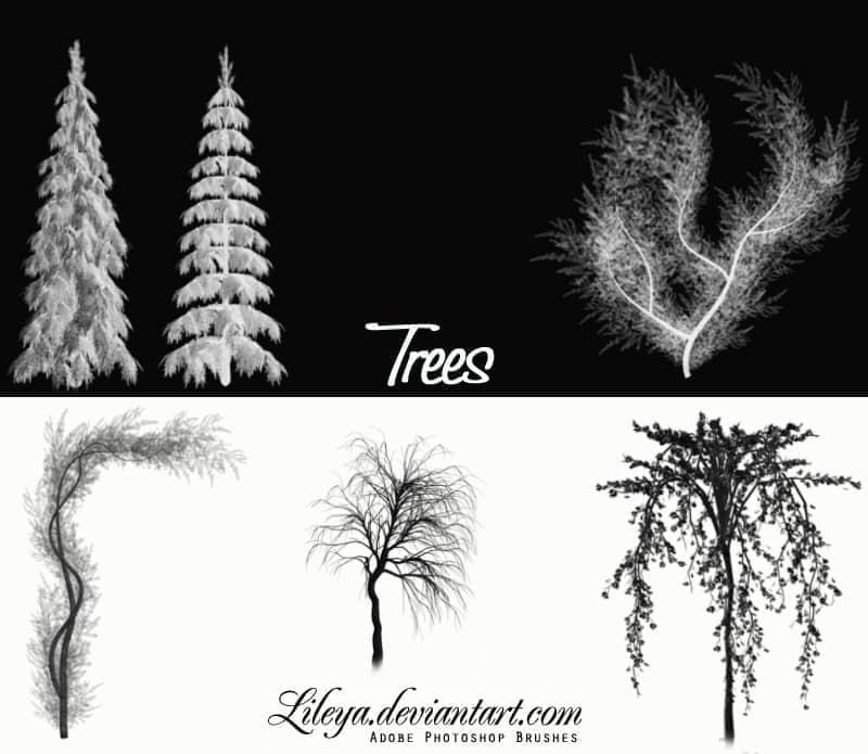 几种松树、树木Photoshop笔刷
