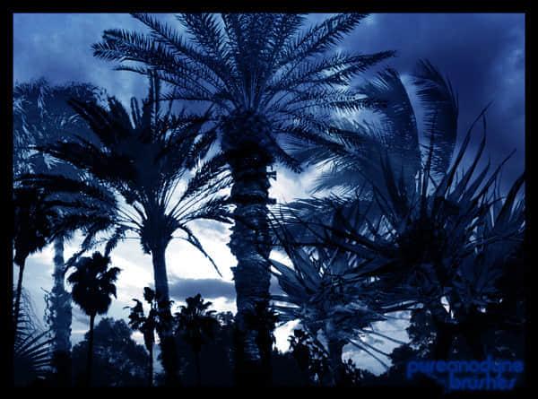 棕榈树、椰子树PS树木笔刷下载