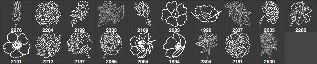 漂亮的手绘鲜花、线框式花朵PS笔刷下载 线框花朵笔刷 手绘花朵笔刷  flowers brushes