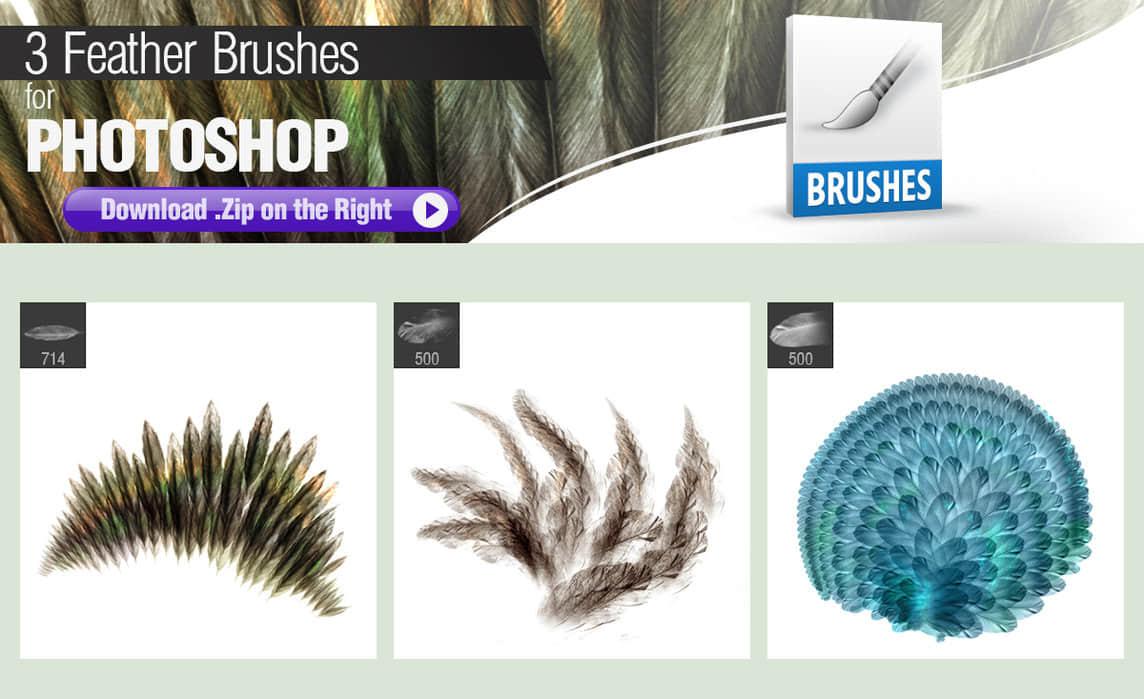 3种羽毛效果画笔Photoshop笔刷素材