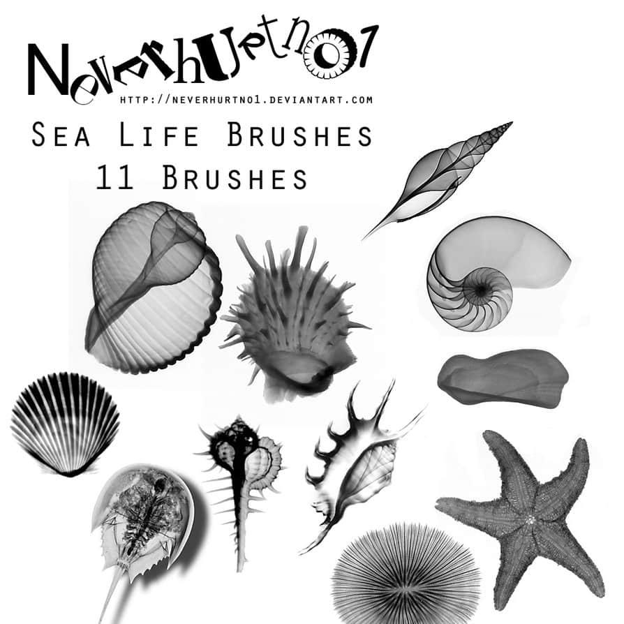贝壳、海螺、海胆、海星Photoshop海洋元素笔刷