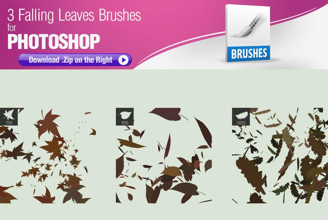 3种树叶、枫叶、落叶PS笔刷素材下载 落叶笔刷 枫叶笔刷 叶子笔刷  plants brushes