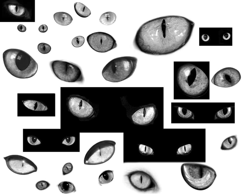 真实猫眼睛PS笔刷素材