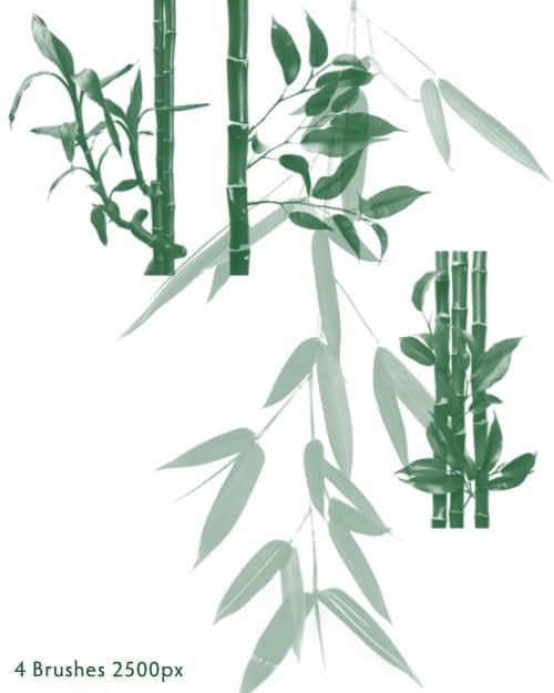 真实竹子、竹节、竹叶Photoshop笔刷素材 竹子笔刷  plants brushes