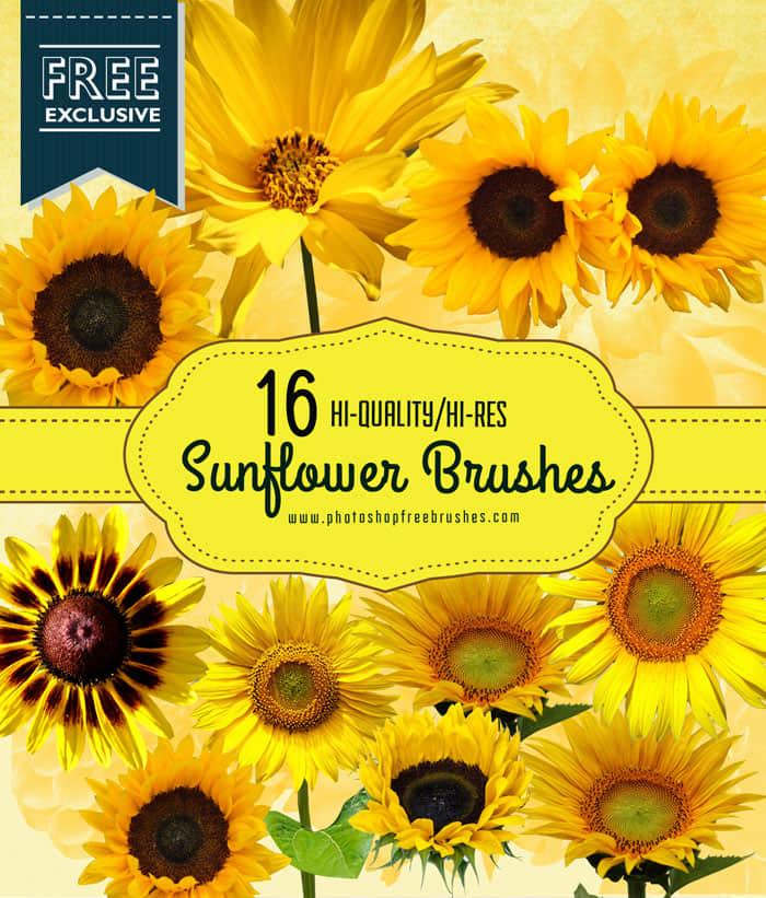 真实的向日葵鲜花Photoshop笔刷下载