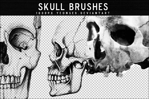 人体骷髅头、头颅骨头PS笔刷素材下载