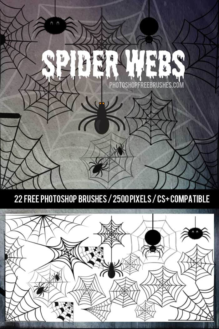 可爱卡通蜘蛛网、蜘蛛Photoshop笔刷下载 蜘蛛网笔刷 蜘蛛笔刷 可爱笔刷  %e5%8d%a1%e9%80%9a%e7%ac%94%e5%88%b7