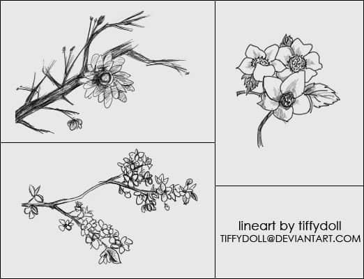 树枝上的花朵Photoshop笔刷下载 花朵笔刷  flowers brushes