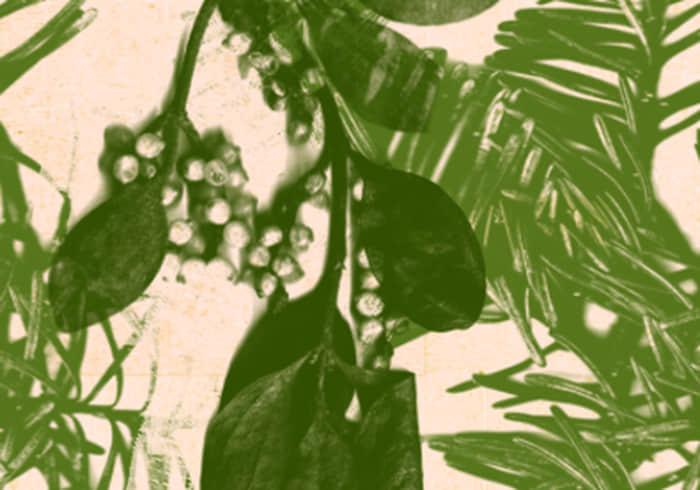 Photoshop CS5绿色植物叶子笔刷下载 松针叶笔刷 叶子笔刷  plants brushes