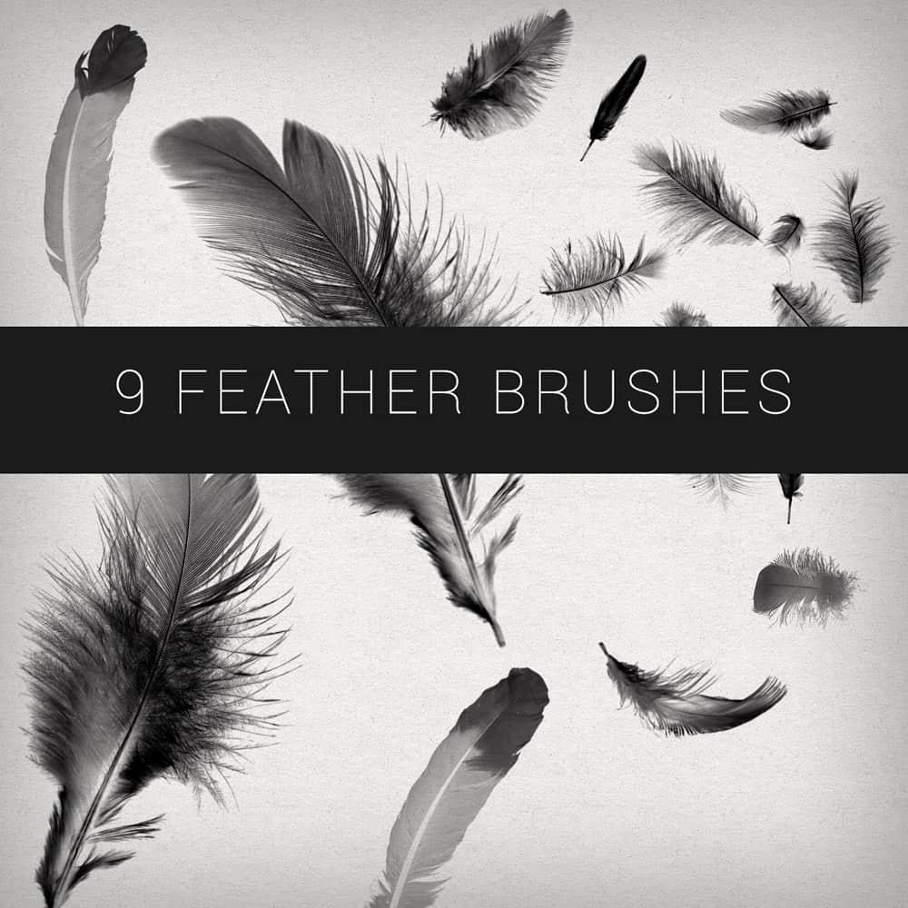 9种免费的真实羽毛效果PS笔刷 羽毛笔刷  other brushes