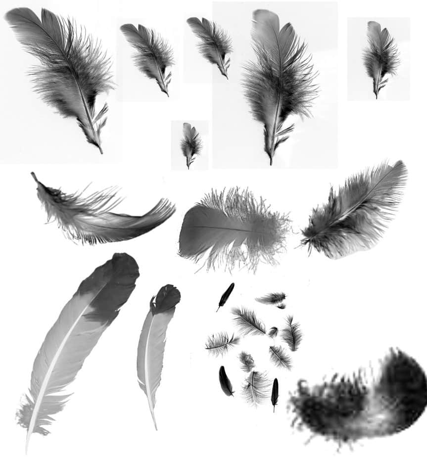 真实的羽毛、鸟毛PS笔刷素材下载 鸟毛笔刷 羽毛笔刷  wings brushes