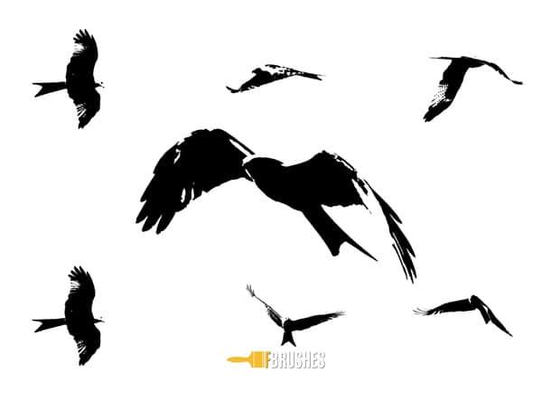 雄鹰、老鹰飞翔的剪影Photoshop笔刷下载