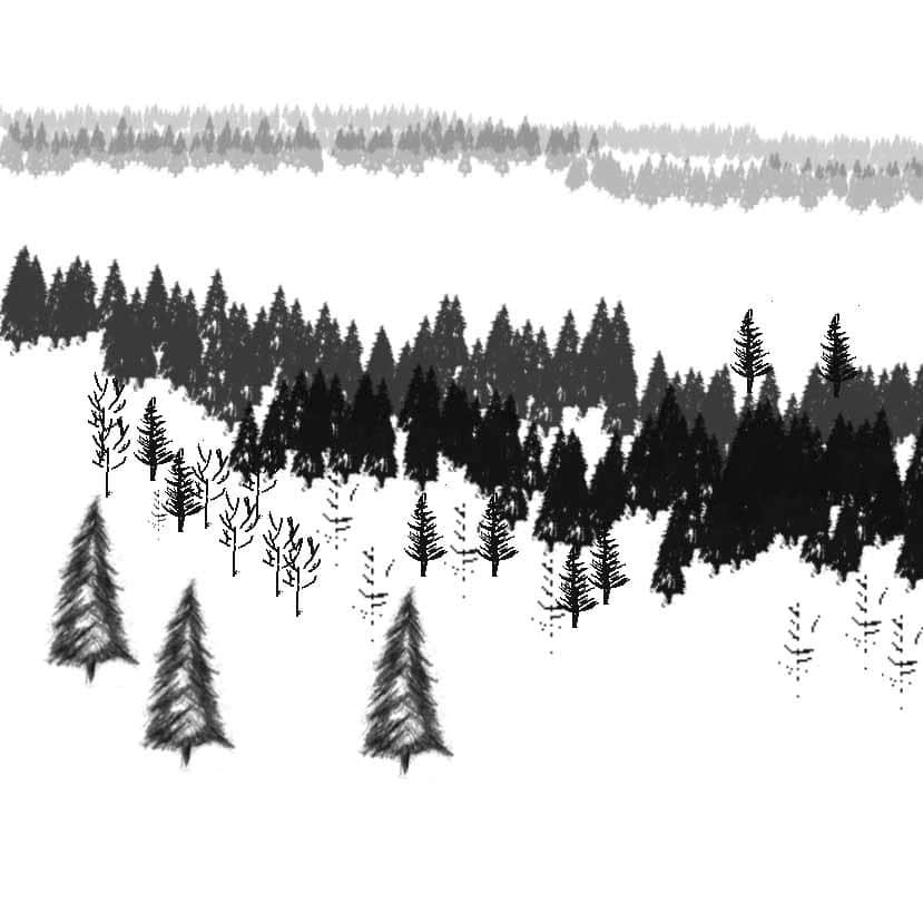 树木背景、森林效果Photoshop笔刷下载